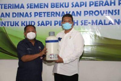 Tingkatkan Produksi Susu, Sapi Perah Proven Bull Akan Dikembangkan di Kabupaten Malang